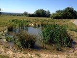 Dale Road Park Pond
