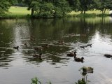 Ducks on Locko Park Lake