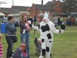 Dancing Cow!